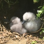 These little ones are a protected species and have their own island!
