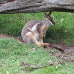 Photo of Caversham Wildlife Park