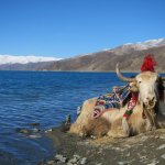 Photo of Yamdrok Yumtso Lake