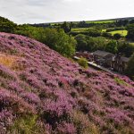 Above Goathland in the heather