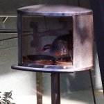 bird in cover