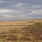 Nairobi National Park at the doorstep of the Ole Sereni Hotel - does not come any better!