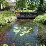 Beautiful Koi Carp Pond
