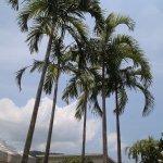 Photo of The Old Phuket