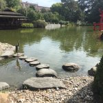 Lovely Japanese garden/pond full of fish. Look out for the terrapins.