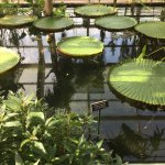 Tropical conservatory - 3 different types to visit