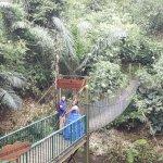 Green Forest Resort Image
