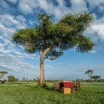 Bush Breakfast on Serengeti Plains