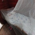 single bed with a mosquito net in a private room