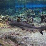 Foto di Aquarium Mare Nostrum