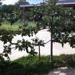 Dwarf trees next to patio