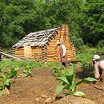 Tending crops on the 1740's American homestead