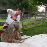 Sheep shearing every spring provided the raw materials for cloth spinning and weaving