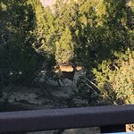 View from our hot tub on our private deck... mule deer passing by