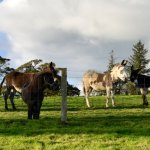 Some more of the stunning Horses & Donkeys at HDH