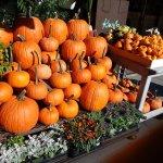 Halloween on Hudson Street