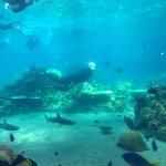 Snorkel experience