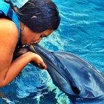Photo of Dolphin Discovery Isla Mujeres