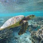 our Sea Turtle friend