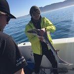 Shark diversity surveys to protect sharks