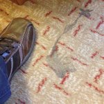 Welcome stain on carpet