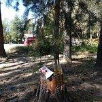 Cronwell Park Yahonty Noginsk Foto
