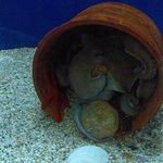 Foto de Aquaworld Aquarium & Reptile Rescue Centre