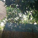 Foto van Panaderia Pastelería Ca'n Molinas