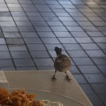Bids flying around at dinner and sitting on your table while you eat! Not very clean!