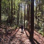 Photo de Pisgah National Forest