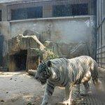 Photo of Jinan Zoo