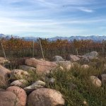 Photo of The Vines of Mendoza