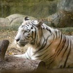 Foto de Fort Worth Zoo