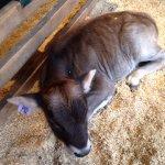 Photo de Shelburne Farms