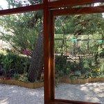 Photo of Botanical Garden Diomedes