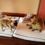 Mis mascotas felices con sus camas y sus chuches de regalo