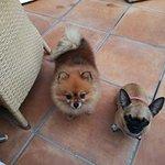 Mis mascotas contentas en la terraza de la cafeteria se despiden ¡¡hasta la próxima¡¡
