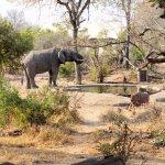 Honeyguide Khoka Moya & Mantobeni Camps Foto