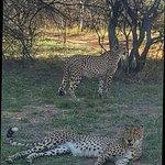 Photo of Ann van Dyk Cheetah Centre