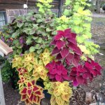 Bob's green thumb makes the place so special!