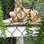 Photo de McCarthy's Wildlife Sanctuary