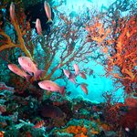 Action Divers Foto