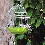 Tiny mannikins on one of the bird feeders.