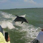 dolphin photos !!!!