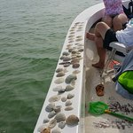 Relaxed trip on gulf side finding shells