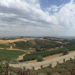 Photo of DAOU Vineyards