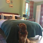 Dog friendly recently renovated bedroom at The Coach House