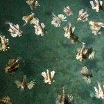 Photo of Nuweiba Coral Resort