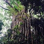 ภาพถ่ายของ Curtain Fig National Park