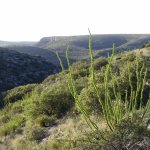 view from Walnut Canyon Drive